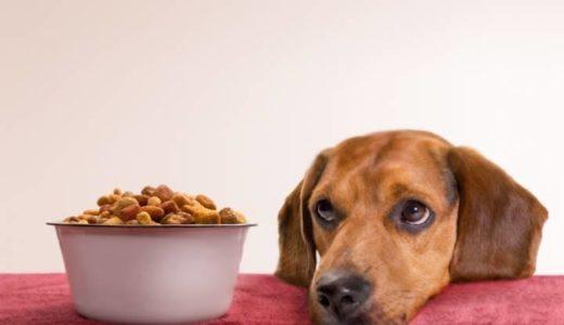 【2020年】愛犬の健康維持のために正しいドッグフードの選び方!