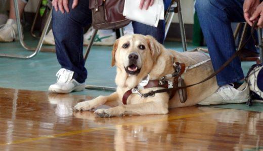 盲導犬の歴史は古い