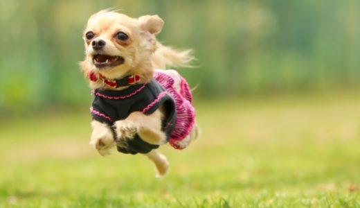足の速い犬Ⅲ