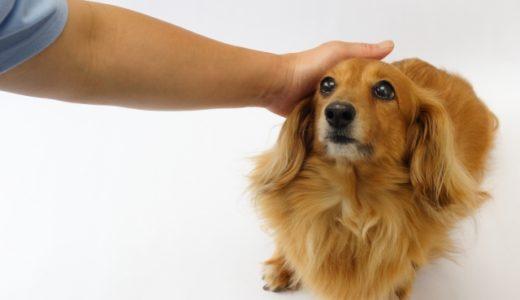 犬に撫でて気持ちいいと思ってもらえる部位はどこ?