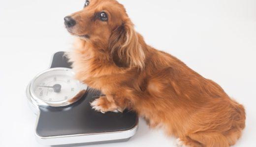 ペットの健康診断を調べてみた