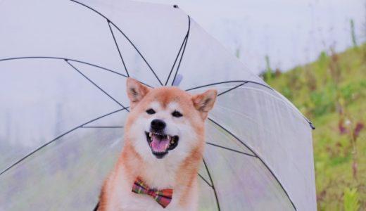 雨の日に犬と遊ぶぞ!