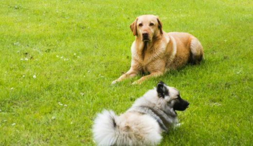 大型犬と小型犬、どちらが飼いやすい?