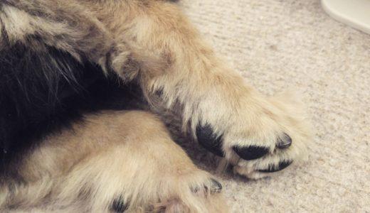 犬の熱中症の見分け方