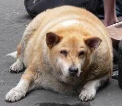 太りやすい犬ランキング!