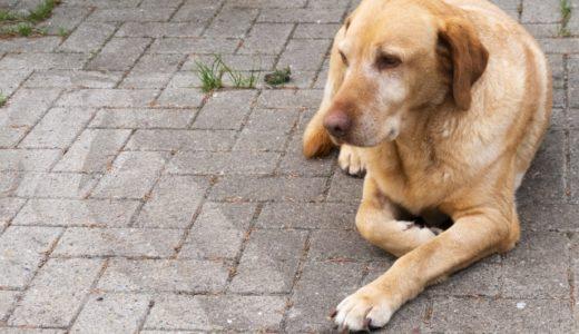 賢い犬ランキング!